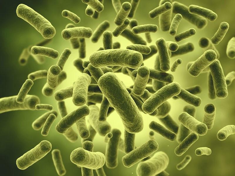 Šta su dezinfekcija, dezinsekcija i deratizacija?