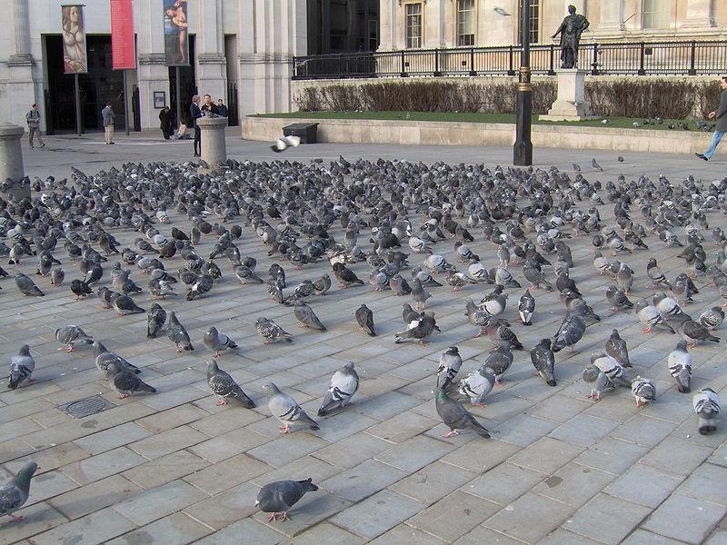 Zaštita od ptica