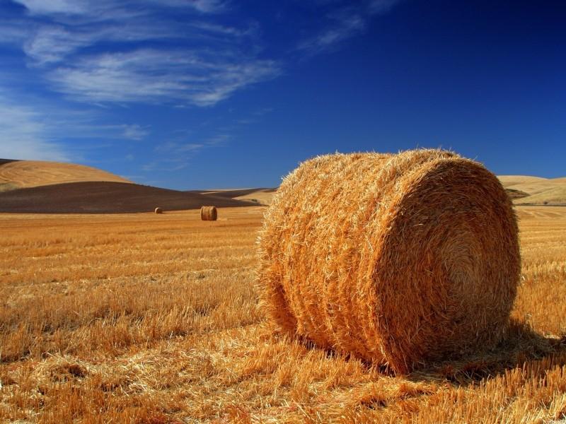 Šta je poljoprivredno zemljište?