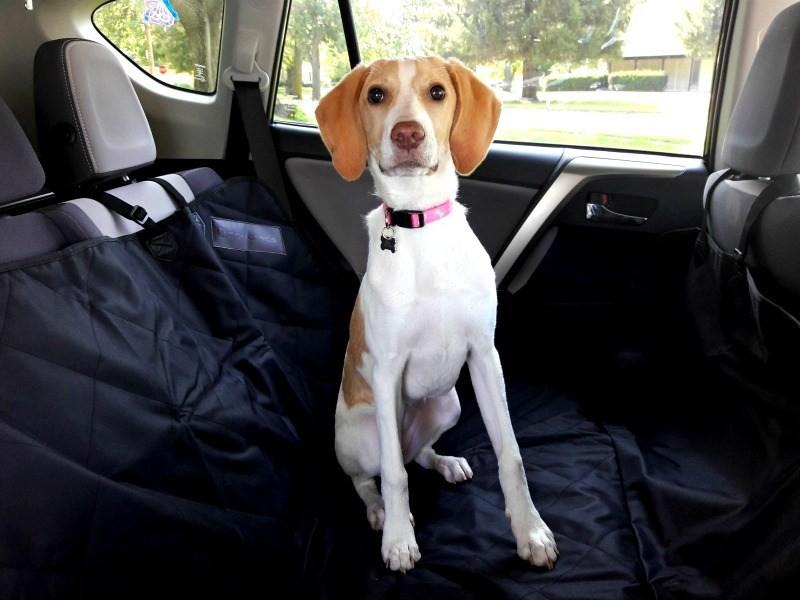 Na putovanje sa vašim psom