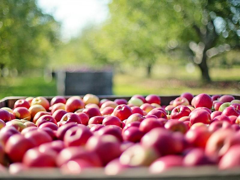 Da li je voćnjak isplativa investicija?