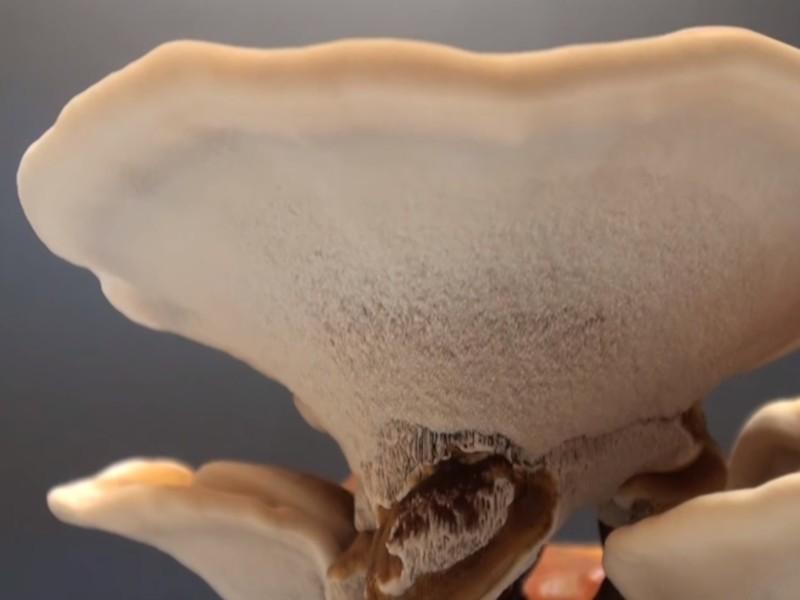 Šta je fungi terapija i da li je ona budućnost medicine?