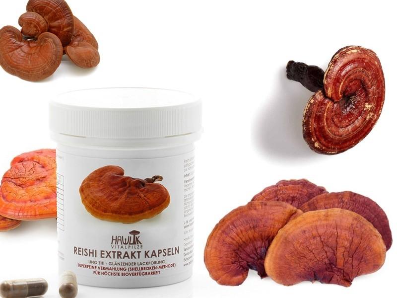 Dijetetski suplementi medicinske gljive - Reishi gljiva