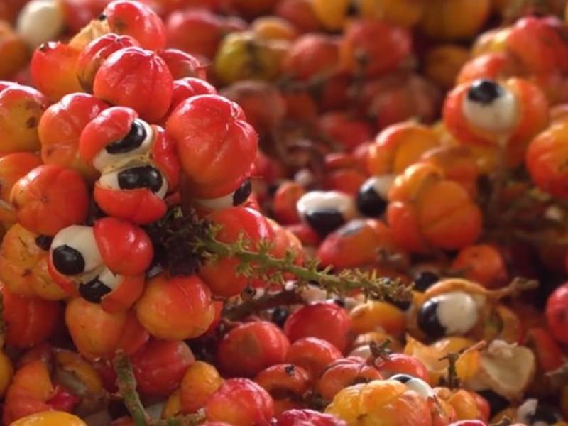 Neobična a moćna guarana