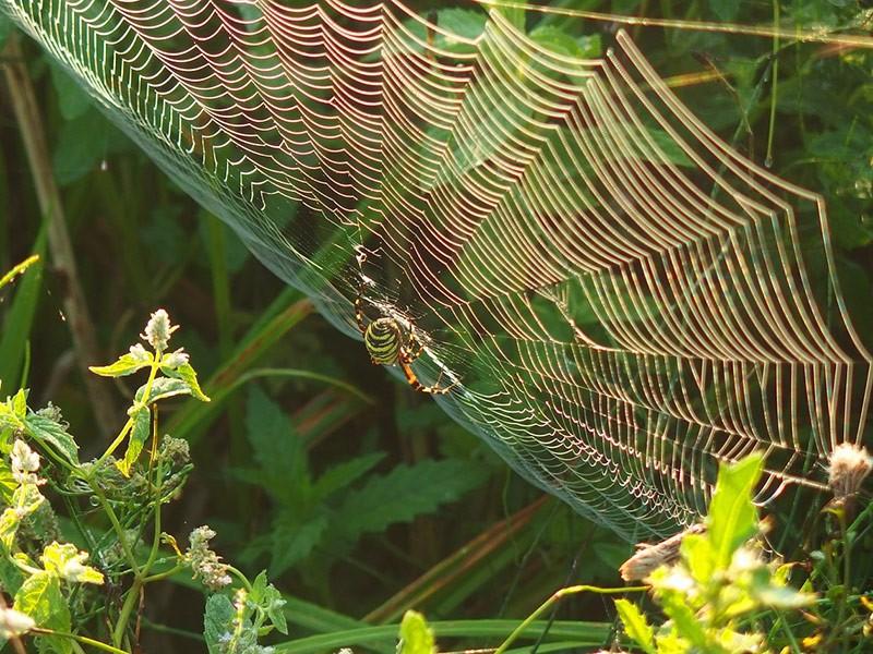 Paukova mreža arhitektonsko čudo