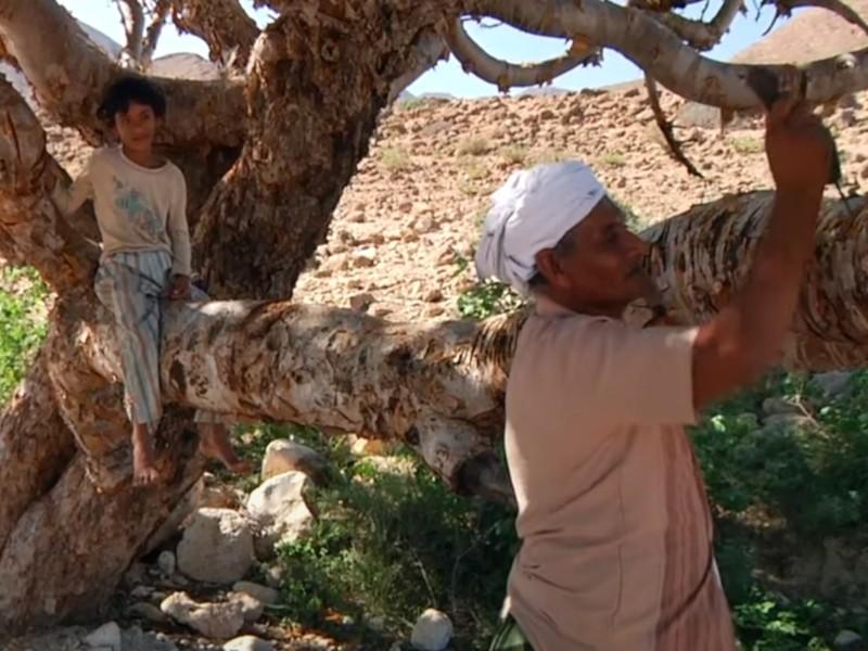 5 moćnih efekata indijskog tamjana