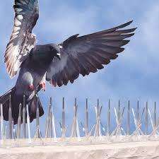 Zaštita od ptica - zaštita od golubova