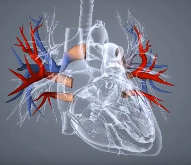 Pro100healthy brine o vasem srcu!