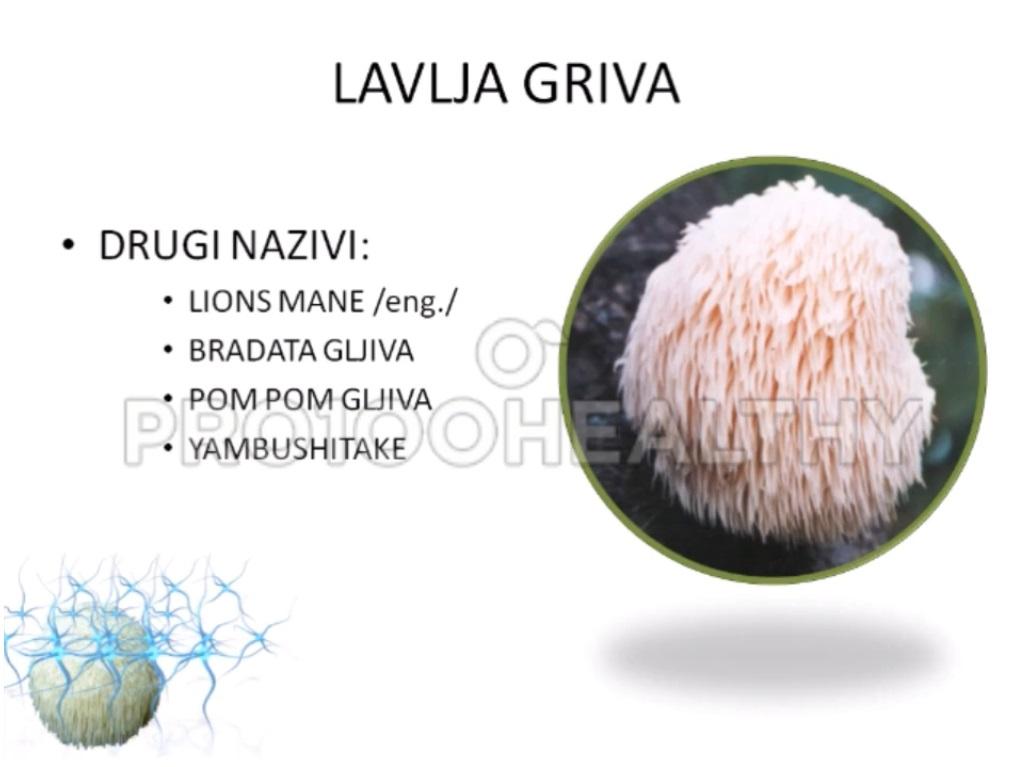 Medicinska lavlja gljiva pro100healthy