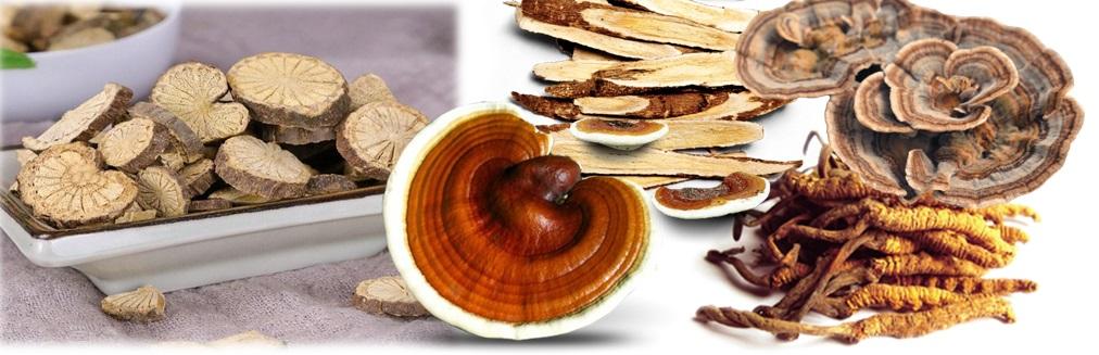 Ganoderma lucidum i druge gljive u borbi protiv koronavirusa