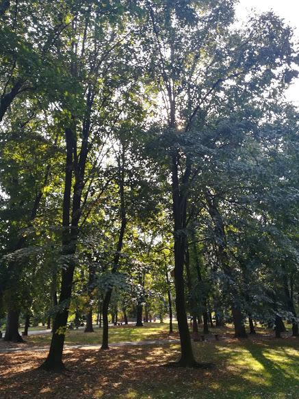 Gradski park Bijeljina zelenilo