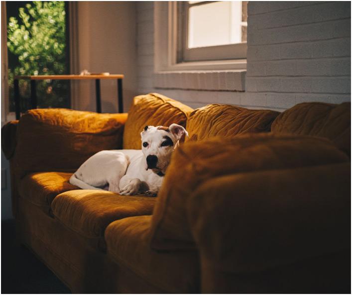 Čuvanje kućnih ljubimaca pas na krevetu