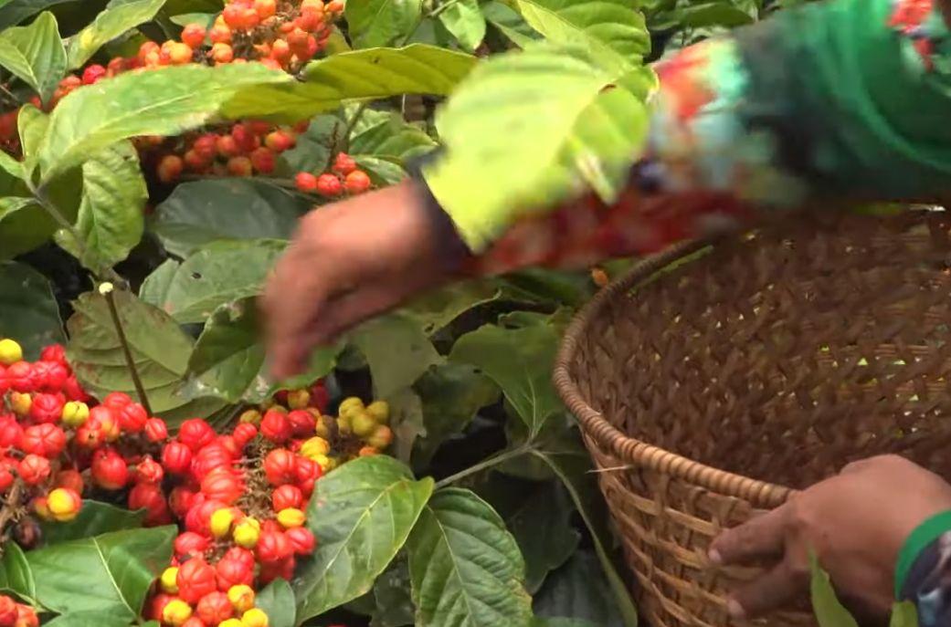 guarana suplement 100% prirodno austrijski proizvod pro100healthy