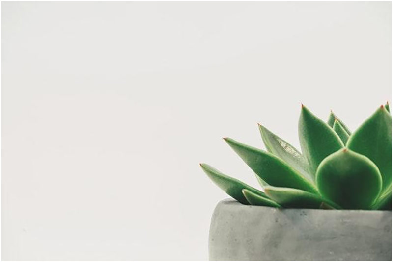 Preciscivac vazduha sobna biljka