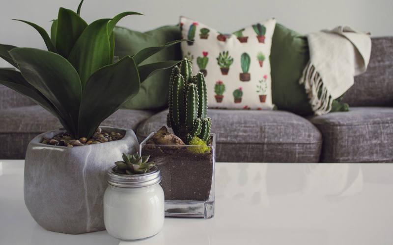 Kaktus u stanu